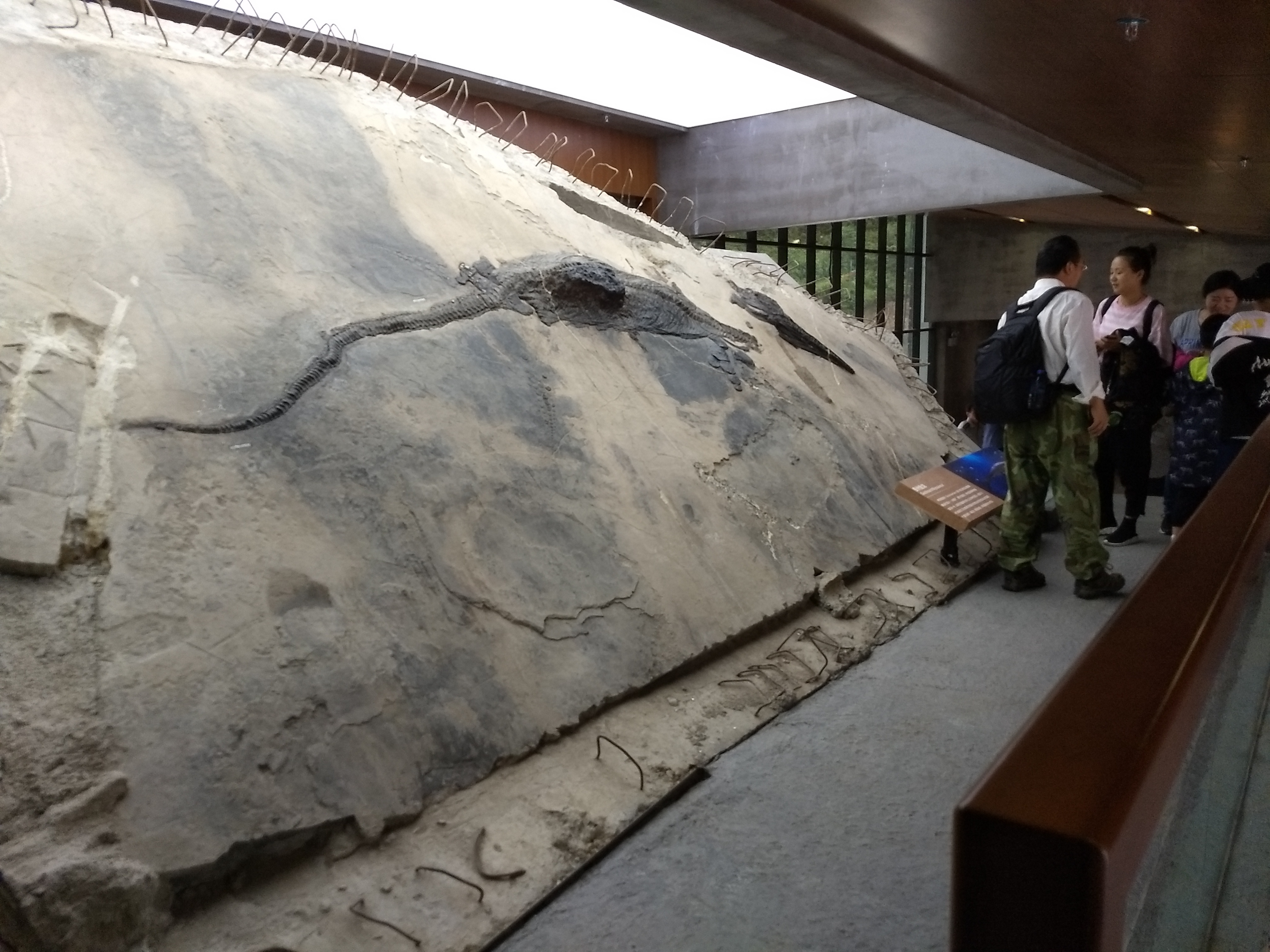 Ichthyosaur Specimen on Display
