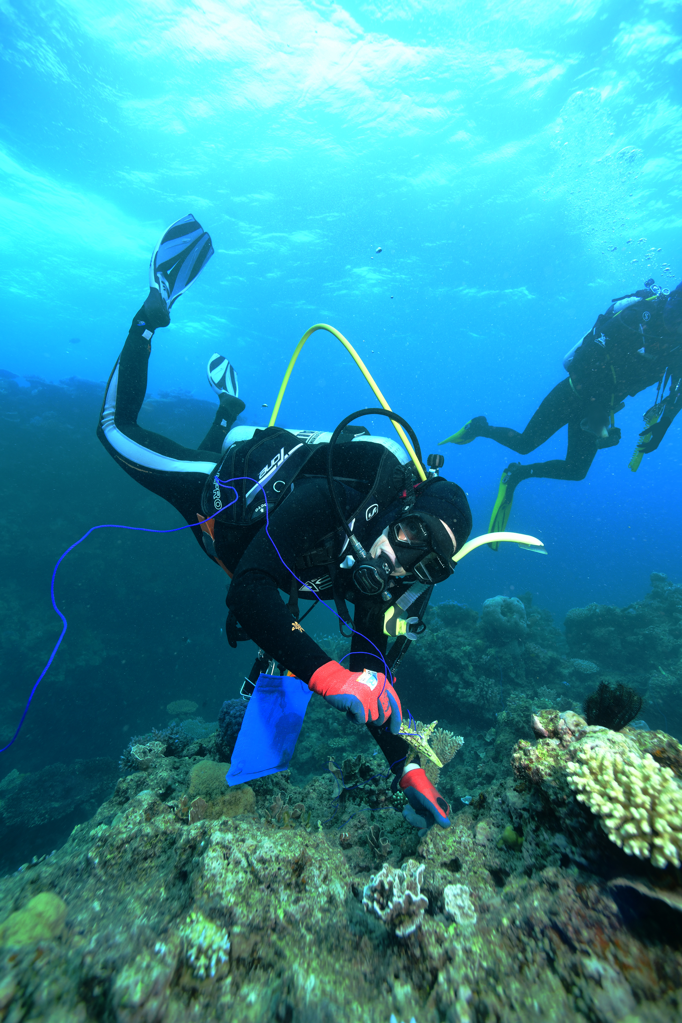 Trialling Coral Settlement Devices