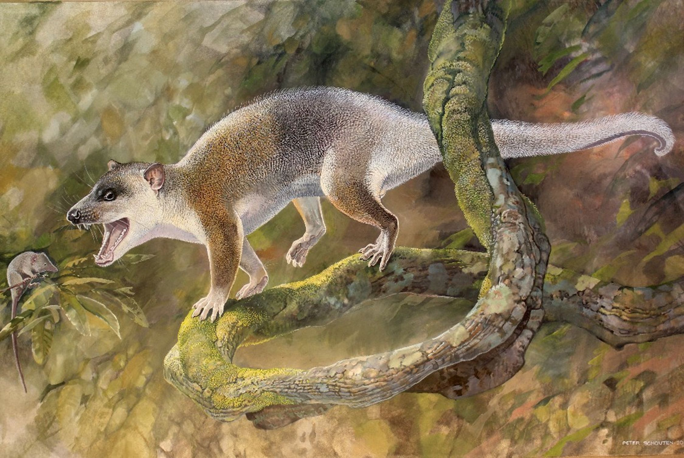 Cenozoic Marsupial-Like Carnivore from Turkey May Have Evolved Without Placental Competitors