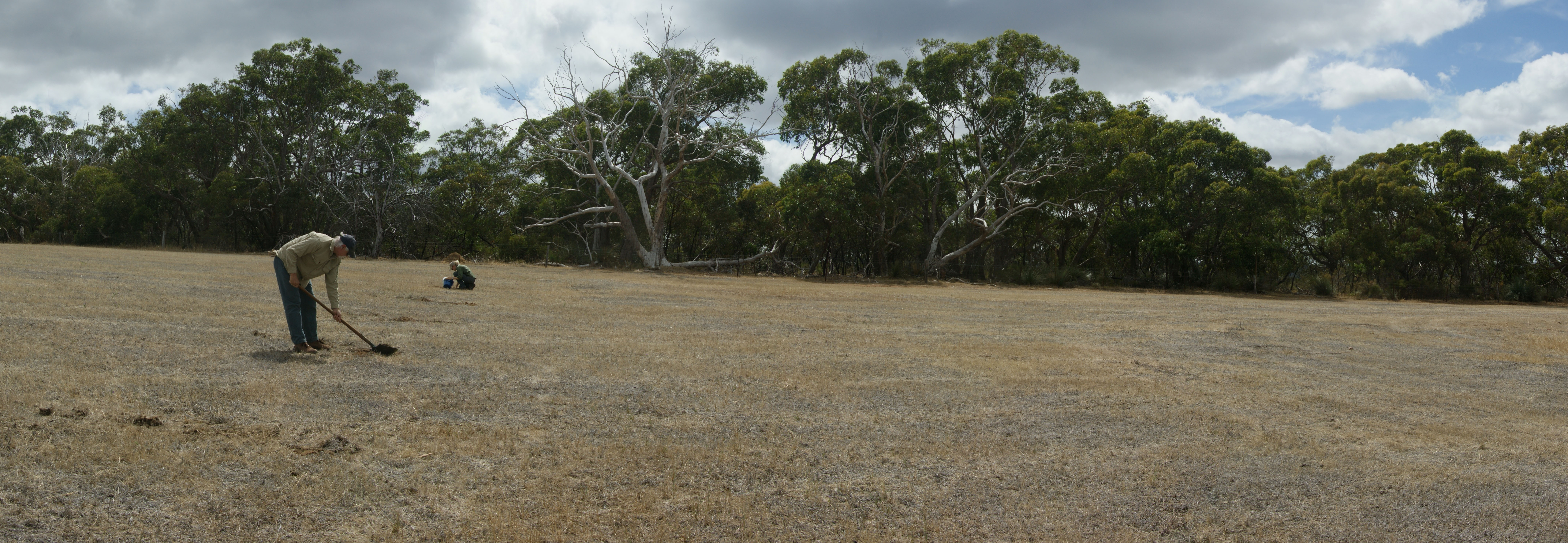 Restoring Land That Has Been Grazed for 100 Years