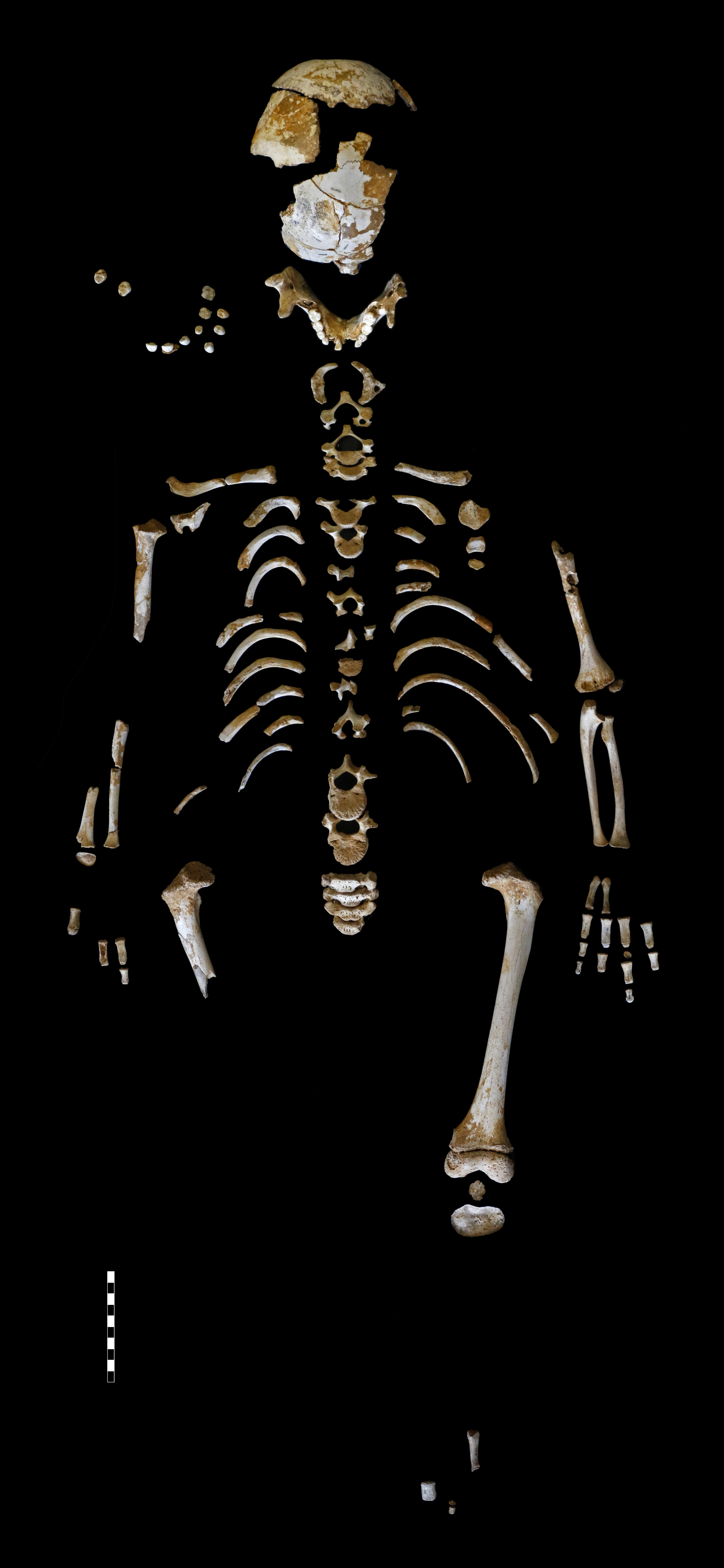 Neandertal Skeleton Reveals the Growth Pattern of Our Extinct Cousins