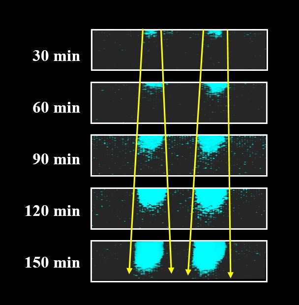 Fluorescent technique brings aging polymers to light