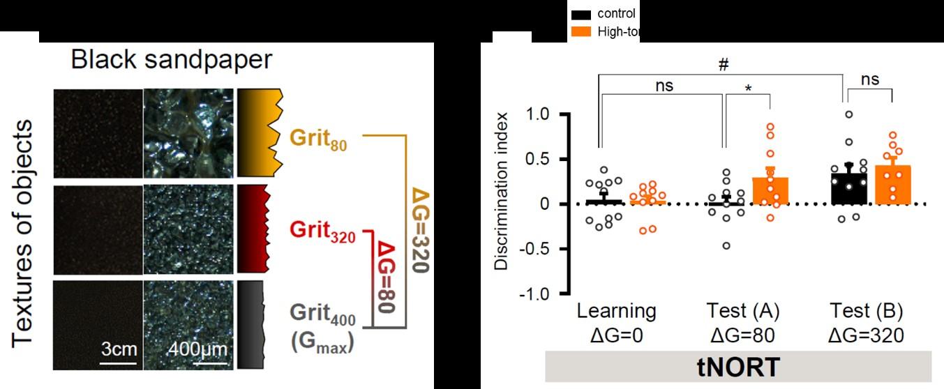 Enhancement of Discrimination Performance in High-Tonic GABA Model