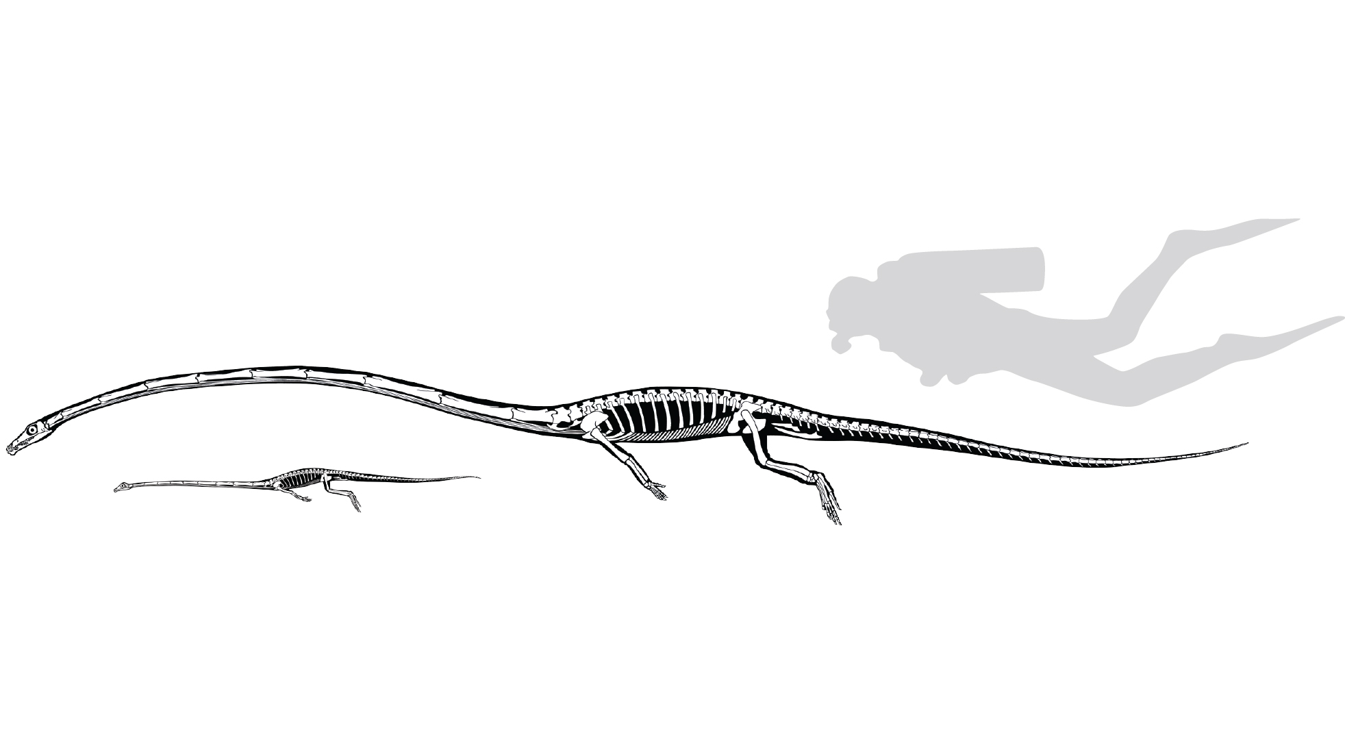 Reconstruction of Skeletons