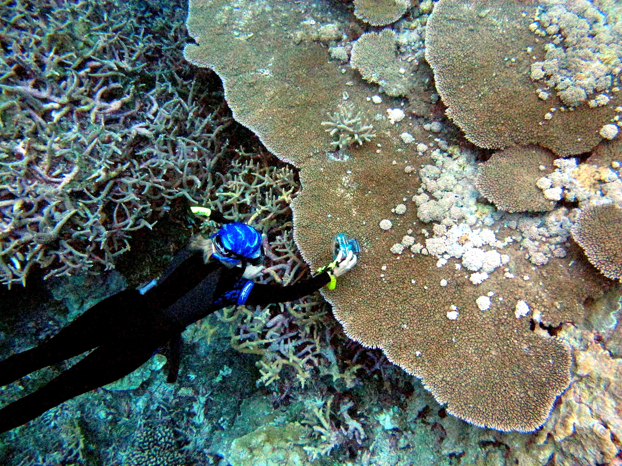 Climate Warming Affecting Coral