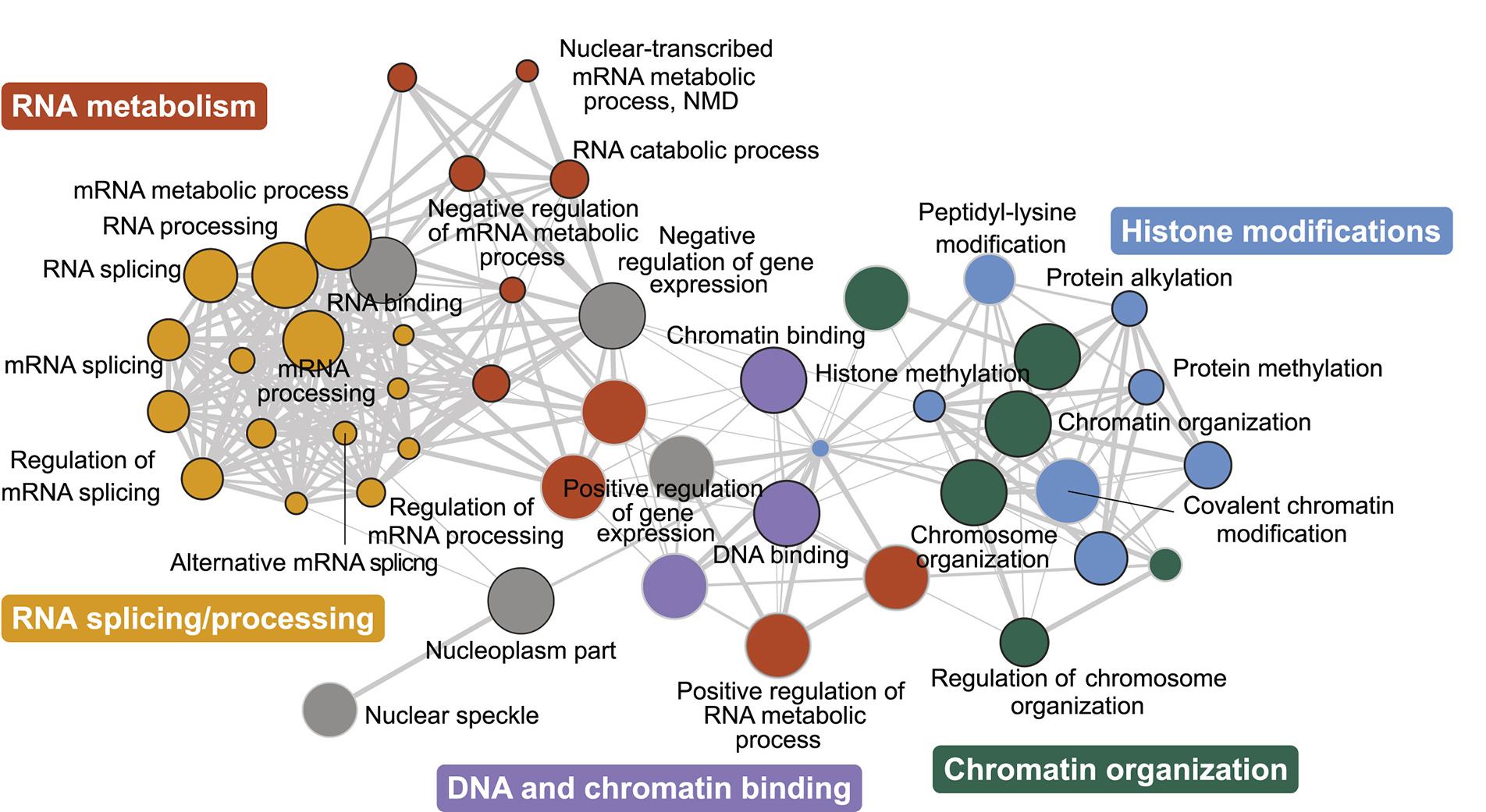 Genetic Network Controlling Microexon Splicing
