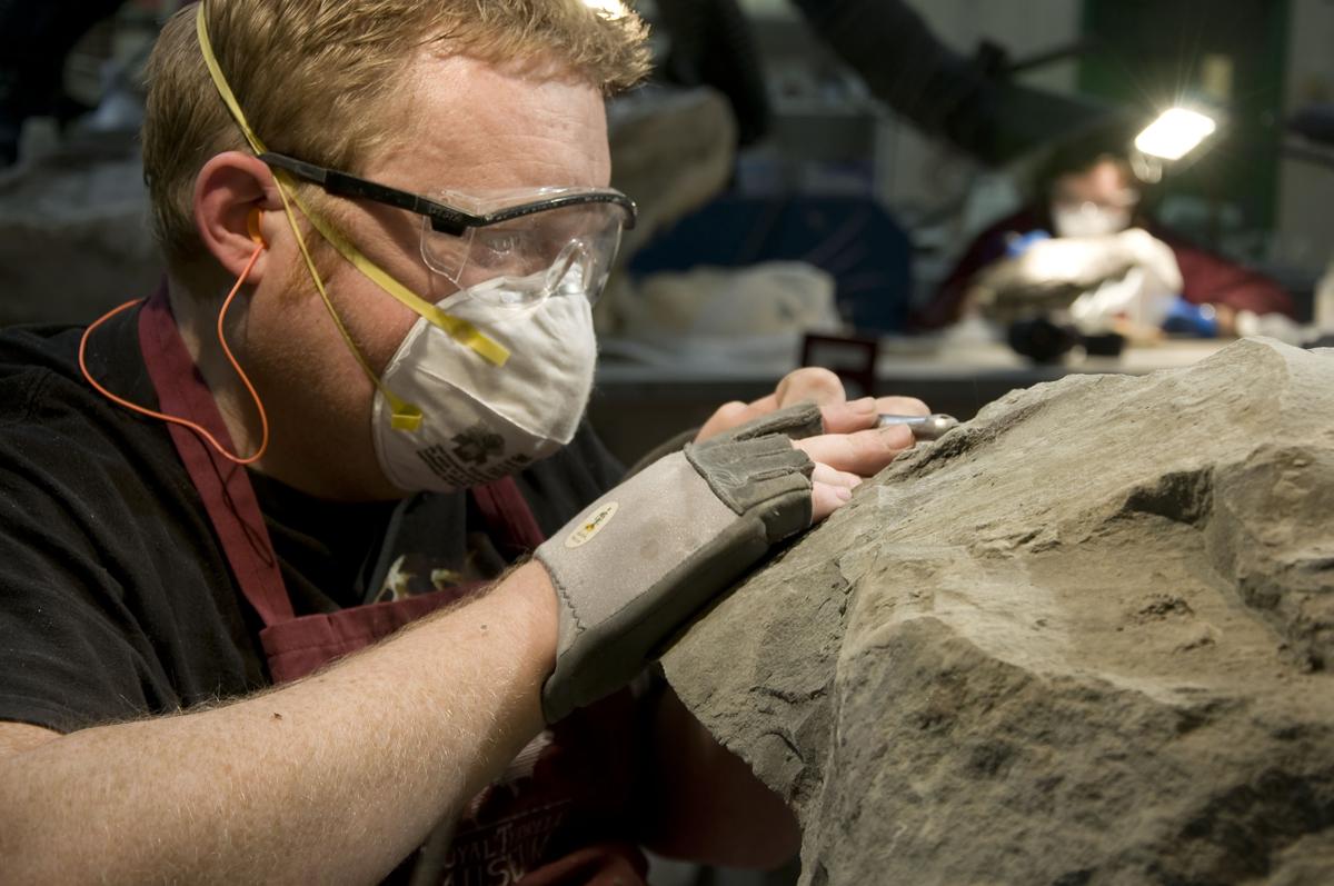 Mark Mitchell Prepping Nodosaur