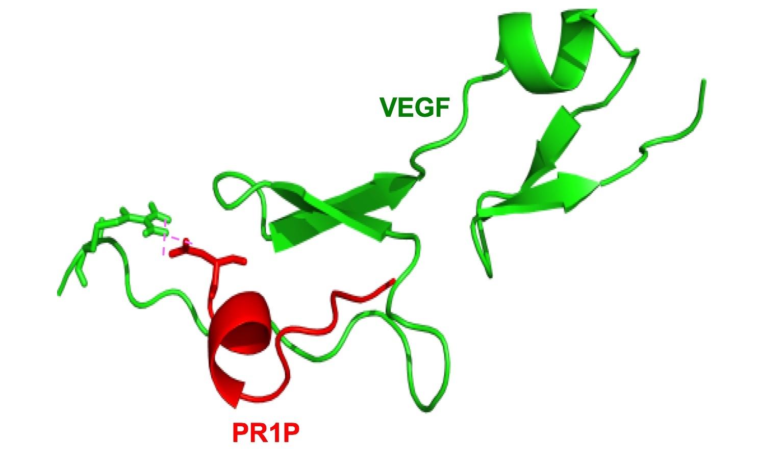 PR1P binding to VEGF
