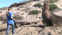 Recording Elephant Seal Calls