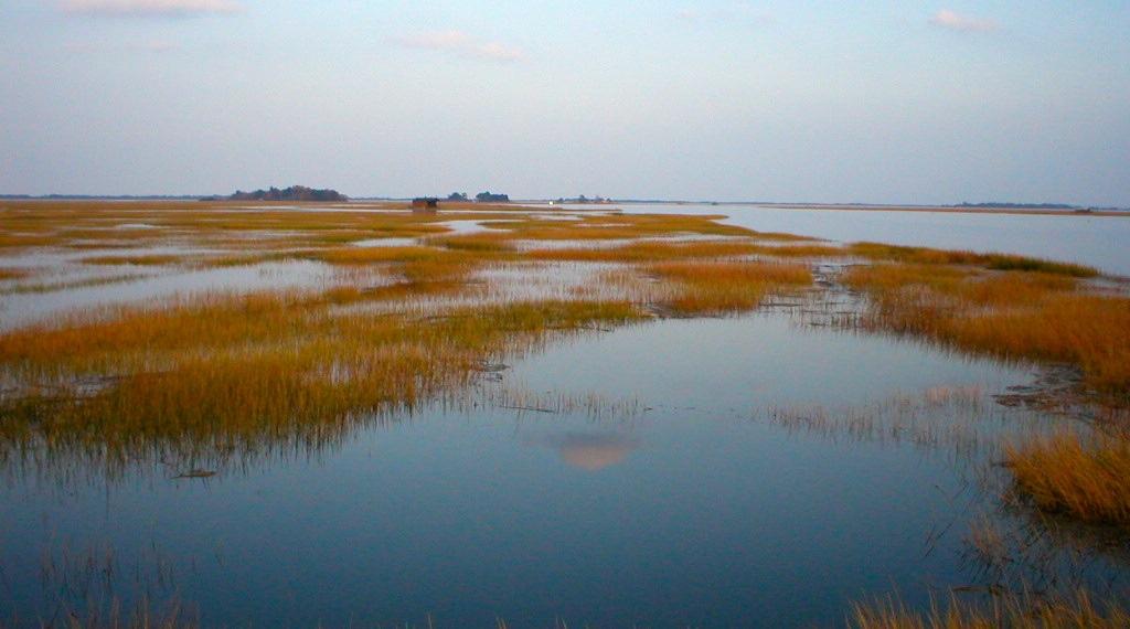 Low-Elevation Wetlands