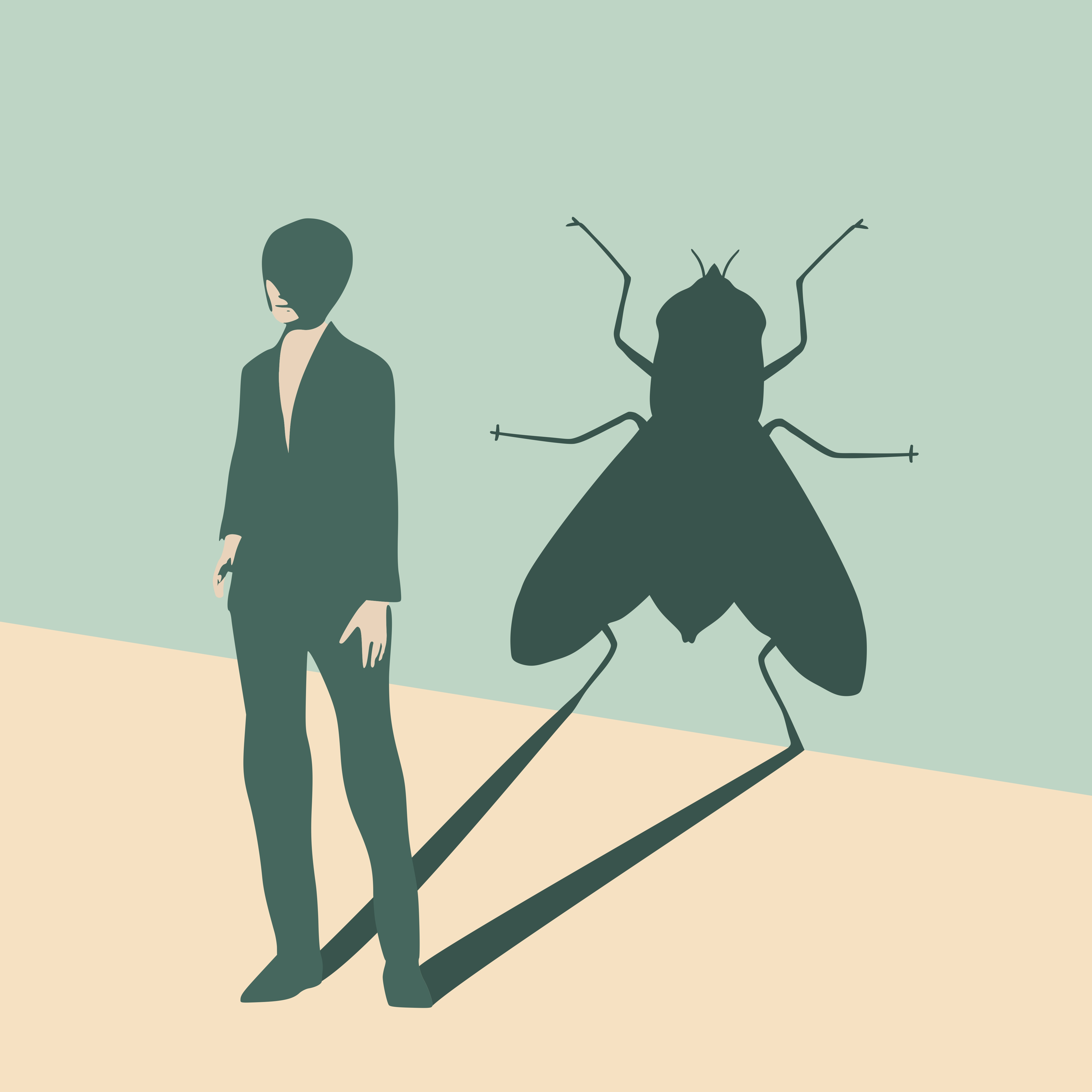 The fly shadow