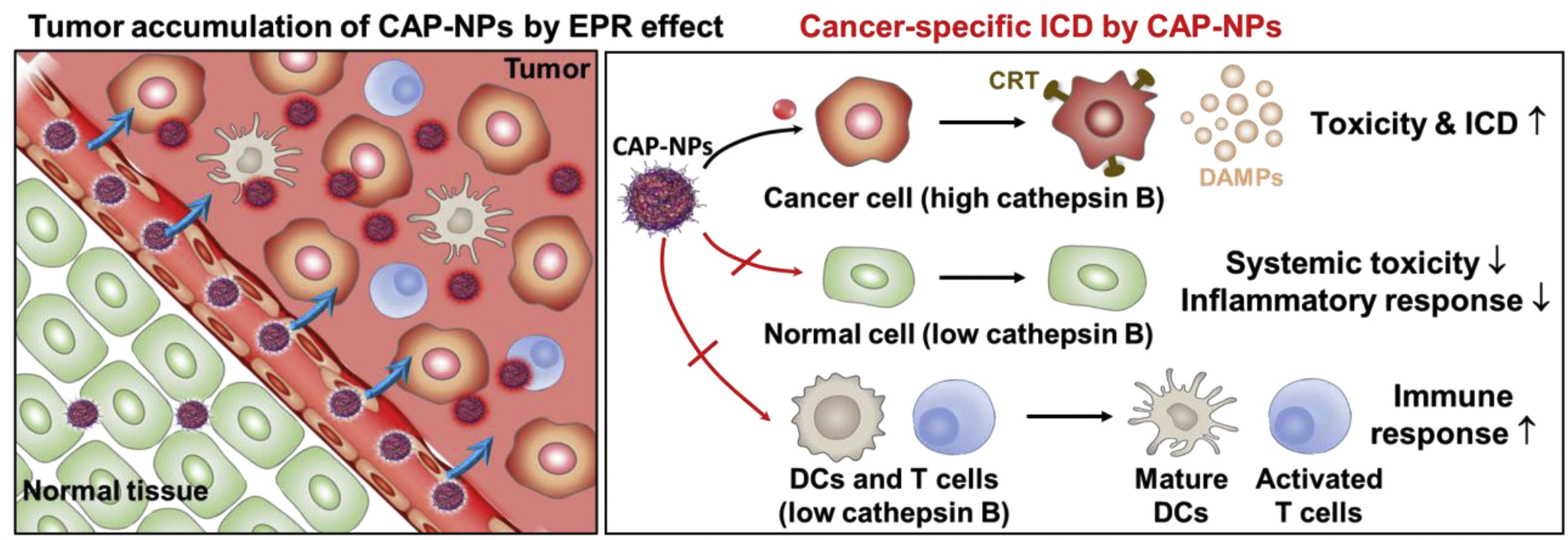 Cancer Treatments Etc. cover image