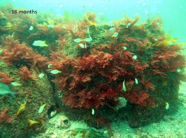 Artificial Reefs at 18 Months