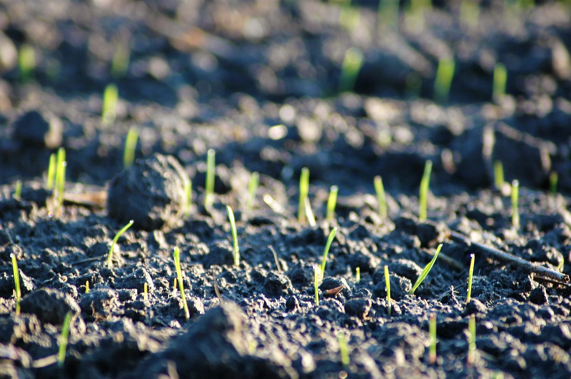 Designing Microbial Communities to Help Plants Battle Nutritional Stress