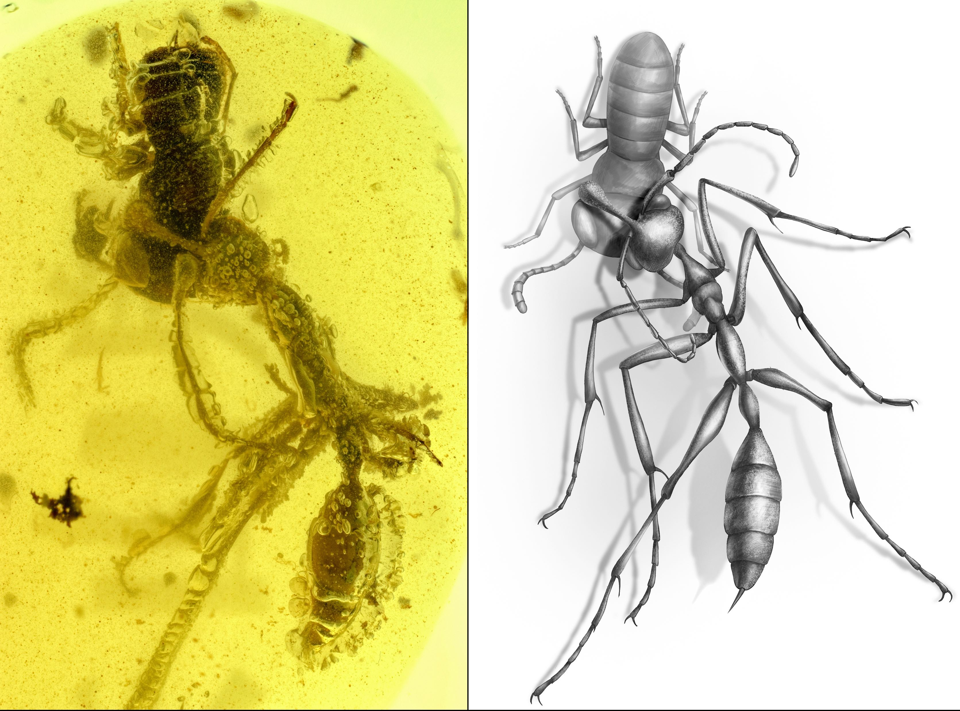 Hunting 'Hell Ant' Fossil Discovery