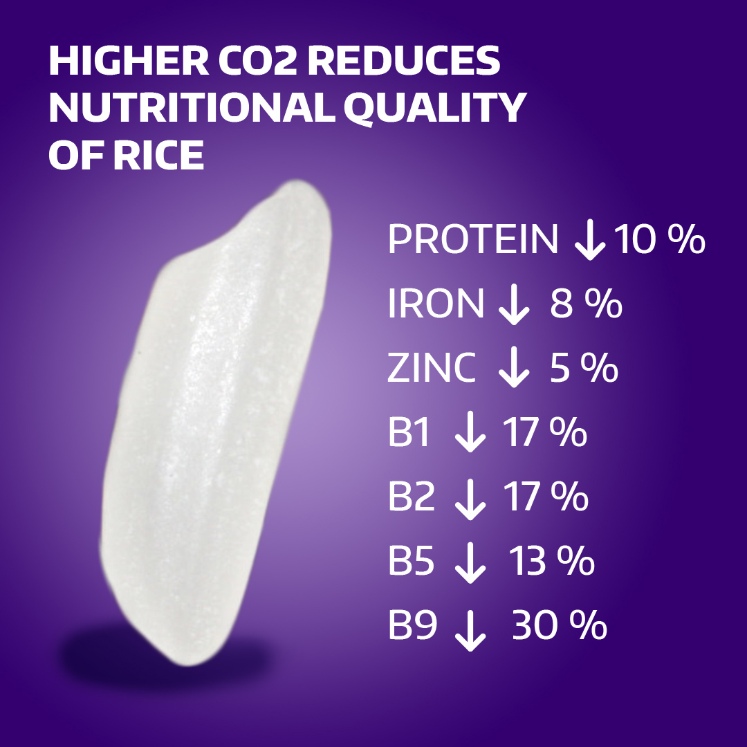 CO2 Depletes Rice Nutrients