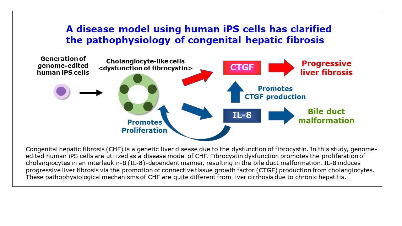 Congenital Hepatic Fibrosis