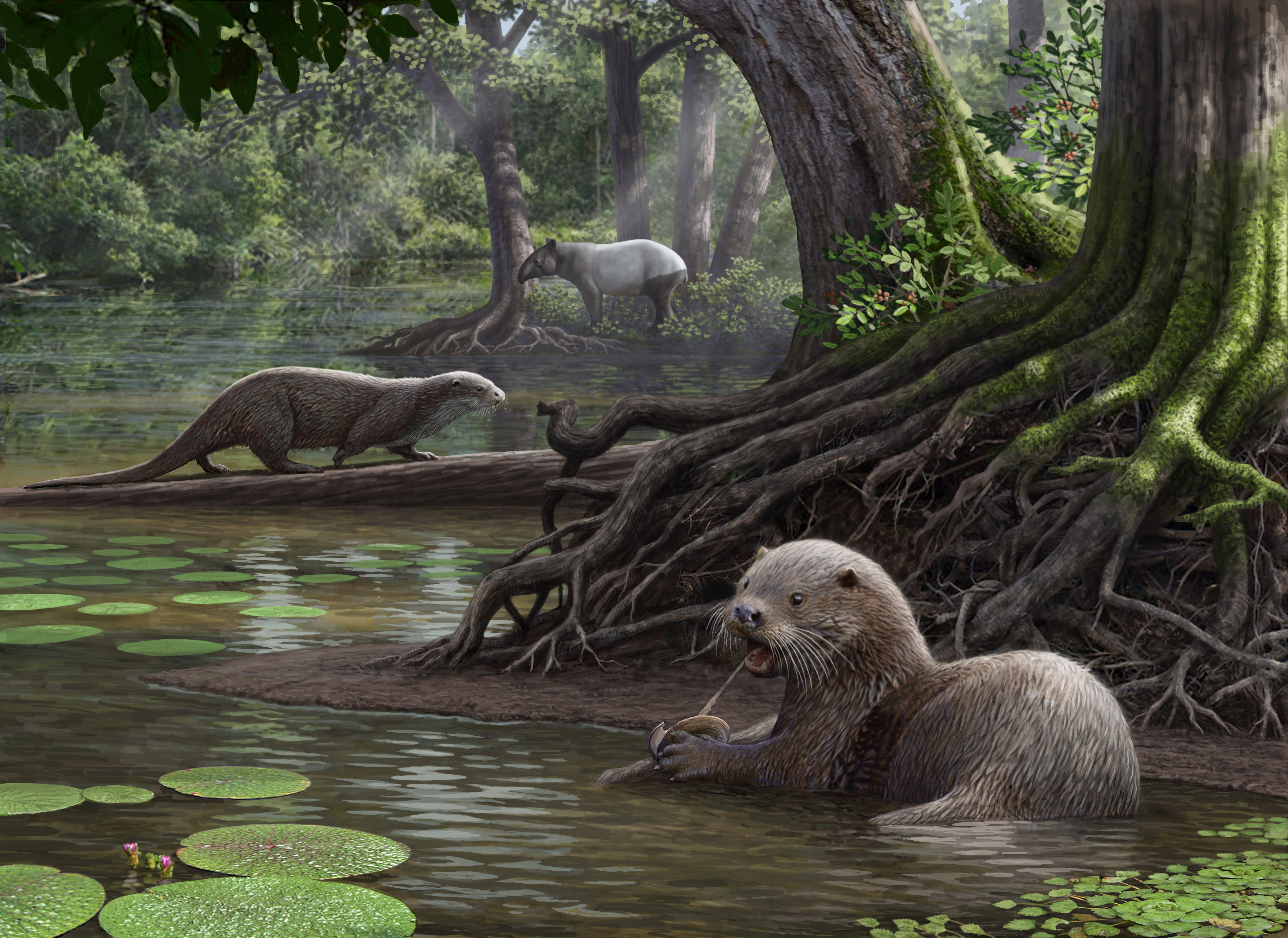 <i>Siamogale melilutra</i> (Artist's Reconstruction)
