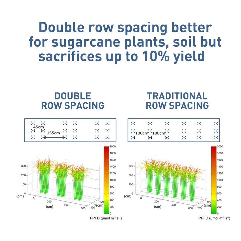 Sugarcane Row Spacing Graphic