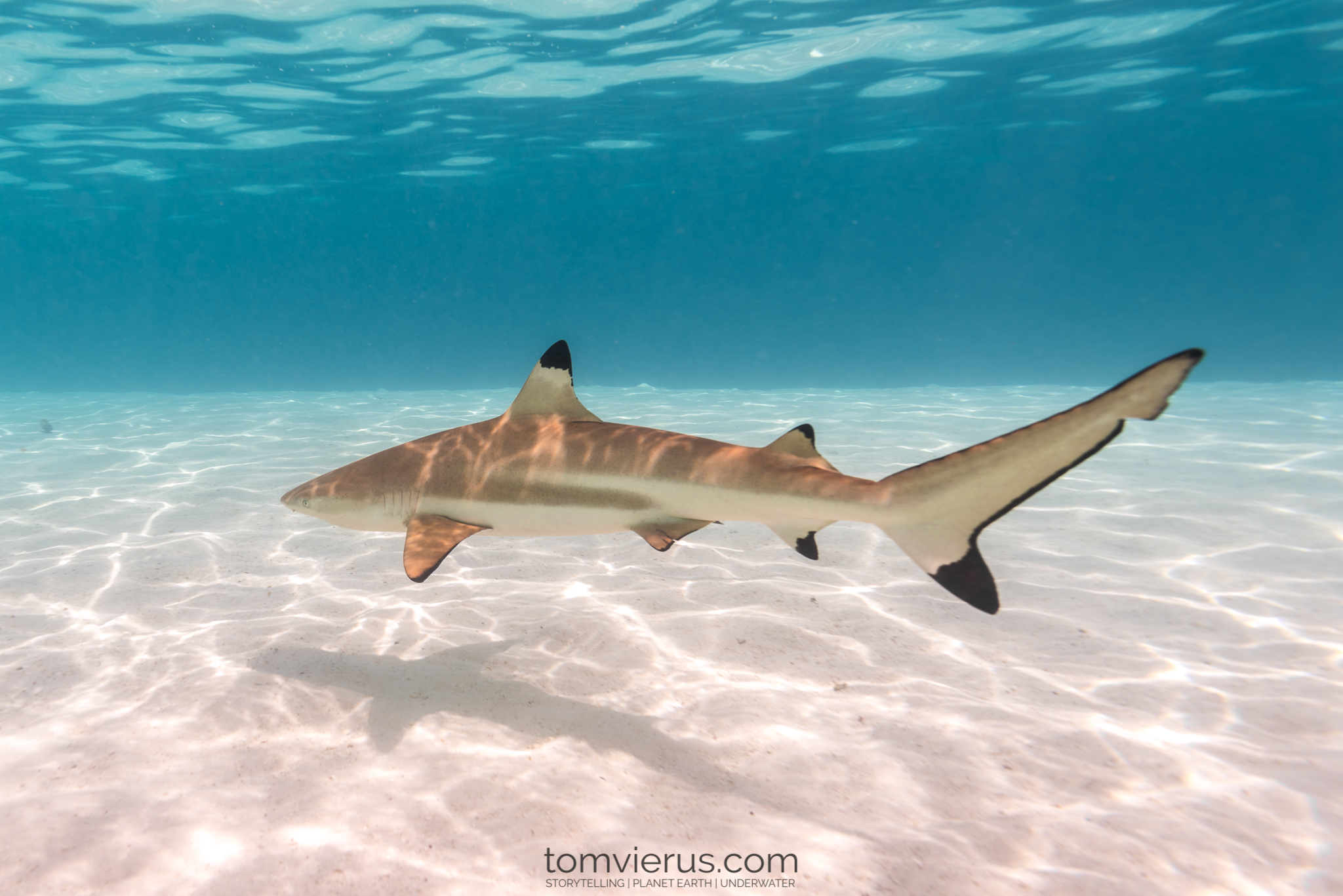 Life in the Shallows Becomes a Trap for Baby Sharks