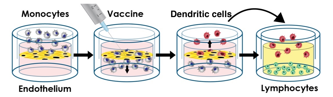 A Personalized Human Tissue Construct for Vaccine Testing