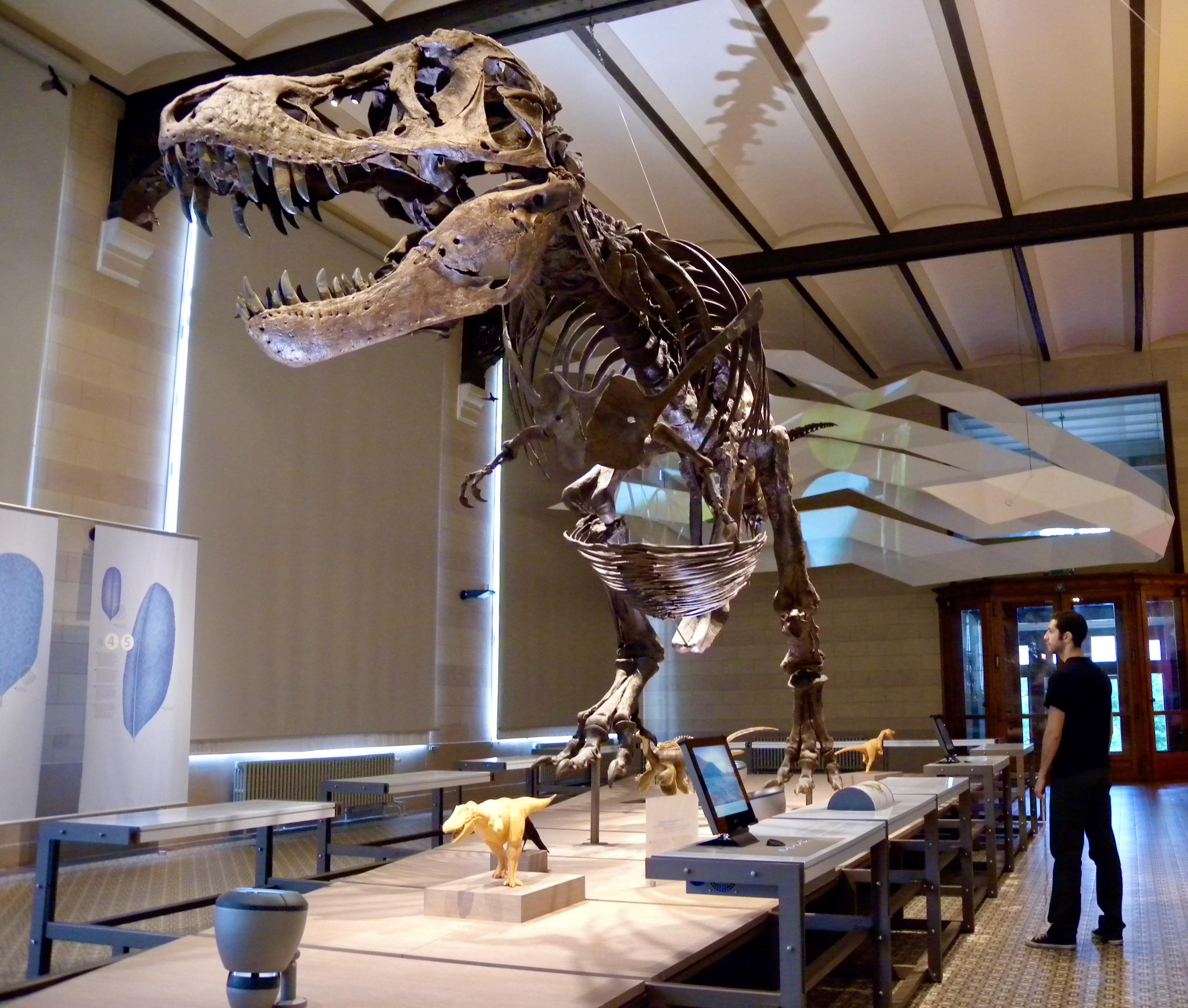 Dr Campione with Tyrannosaurus rex