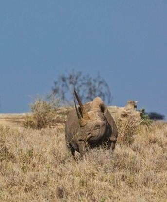 Rhinoceros Photo 1
