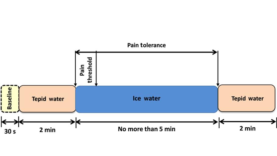 Block Diagram of the Cold Pressor Protocol
