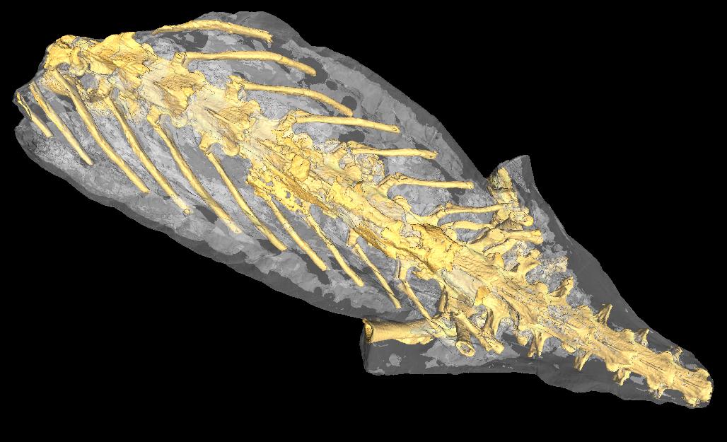 Synchrotron Tomography Scan of Petrified Salamander