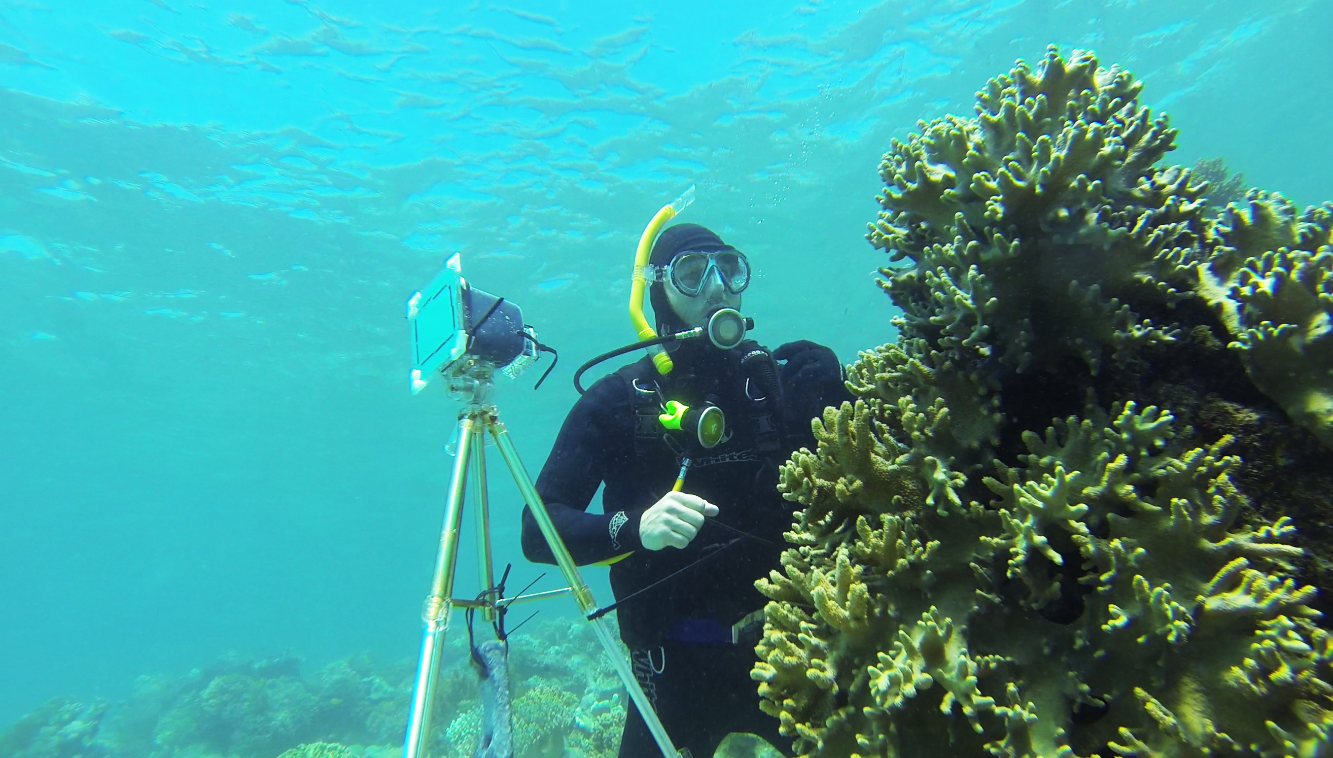 Dr Shelby Temple diving at Great Barrier Reef