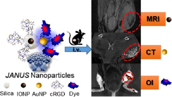 Composition and Application of the JANUS Nanoplatform
