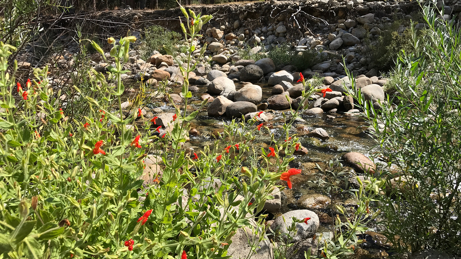 'Demographic Compensation' May Not Save Plants Facing Changing Climate