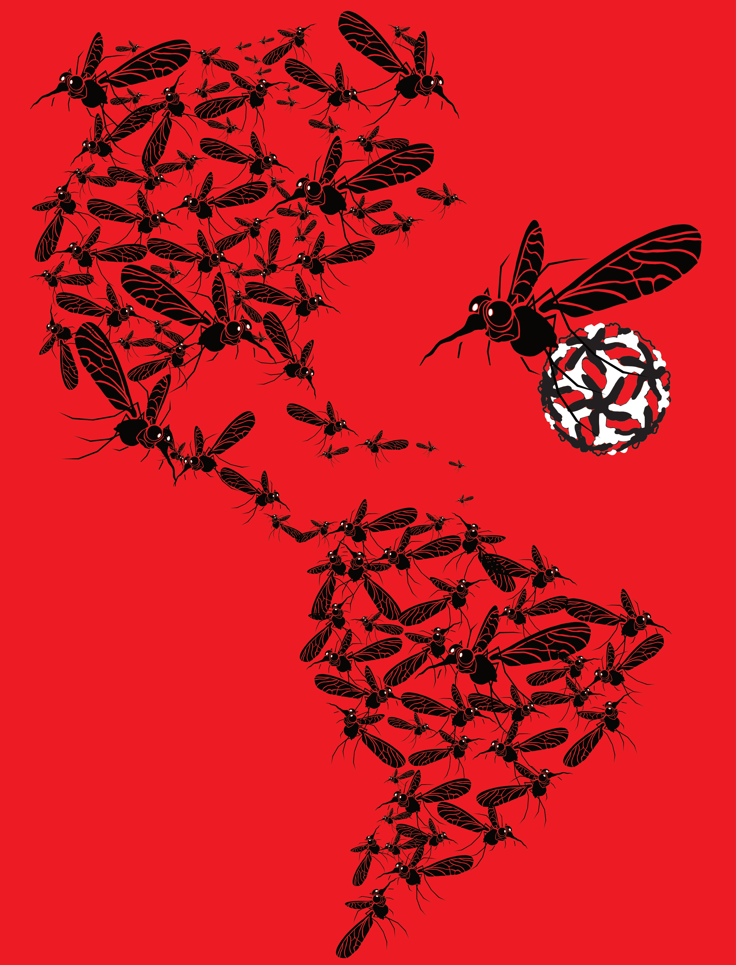 Zika in the Americas