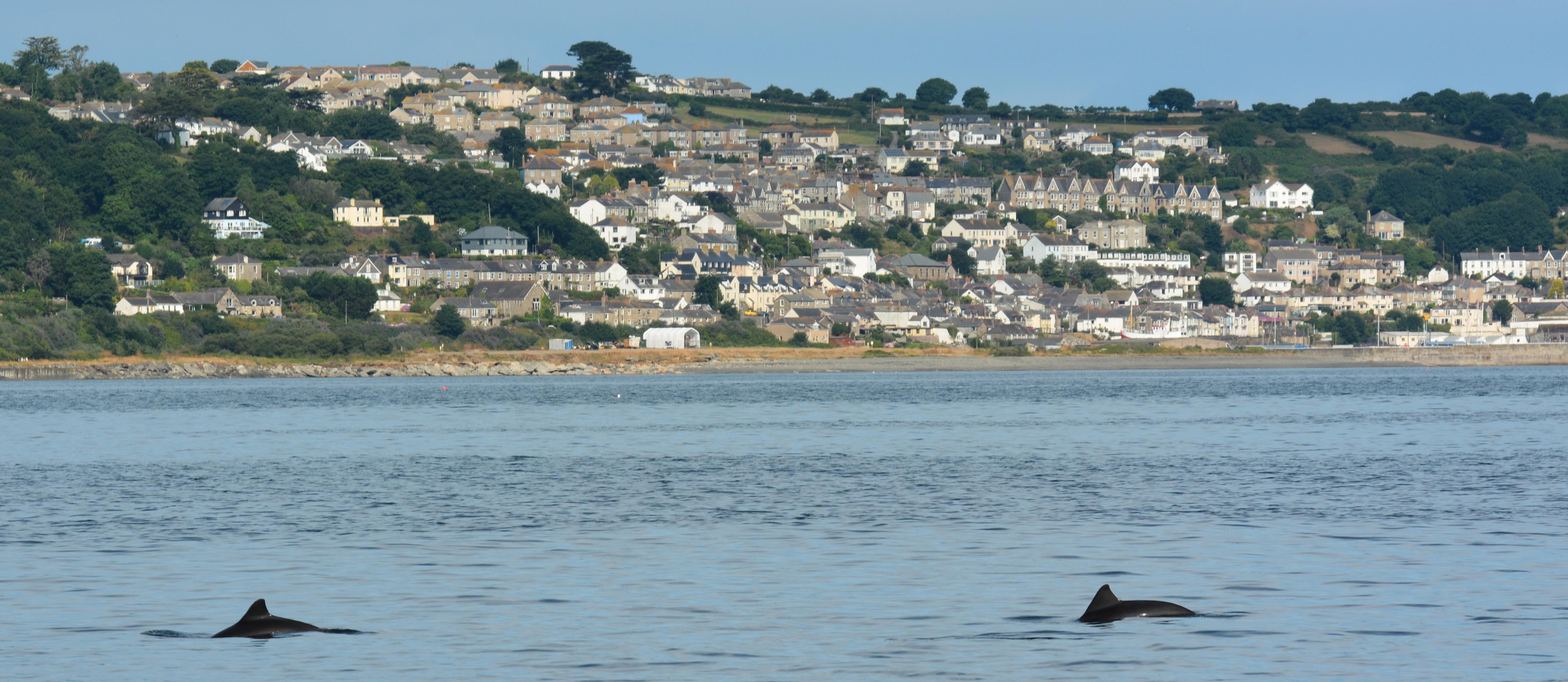 Harbour porpoises