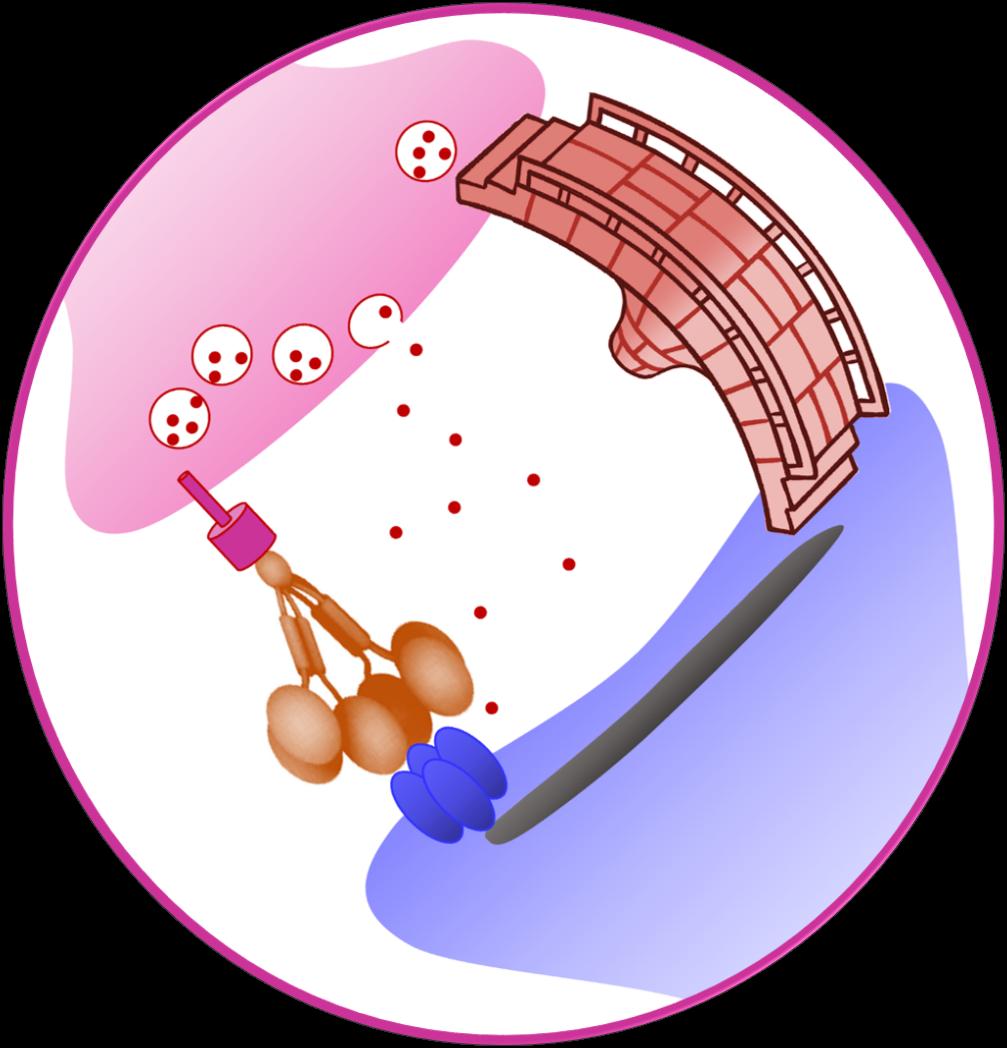 A Molecular Connector