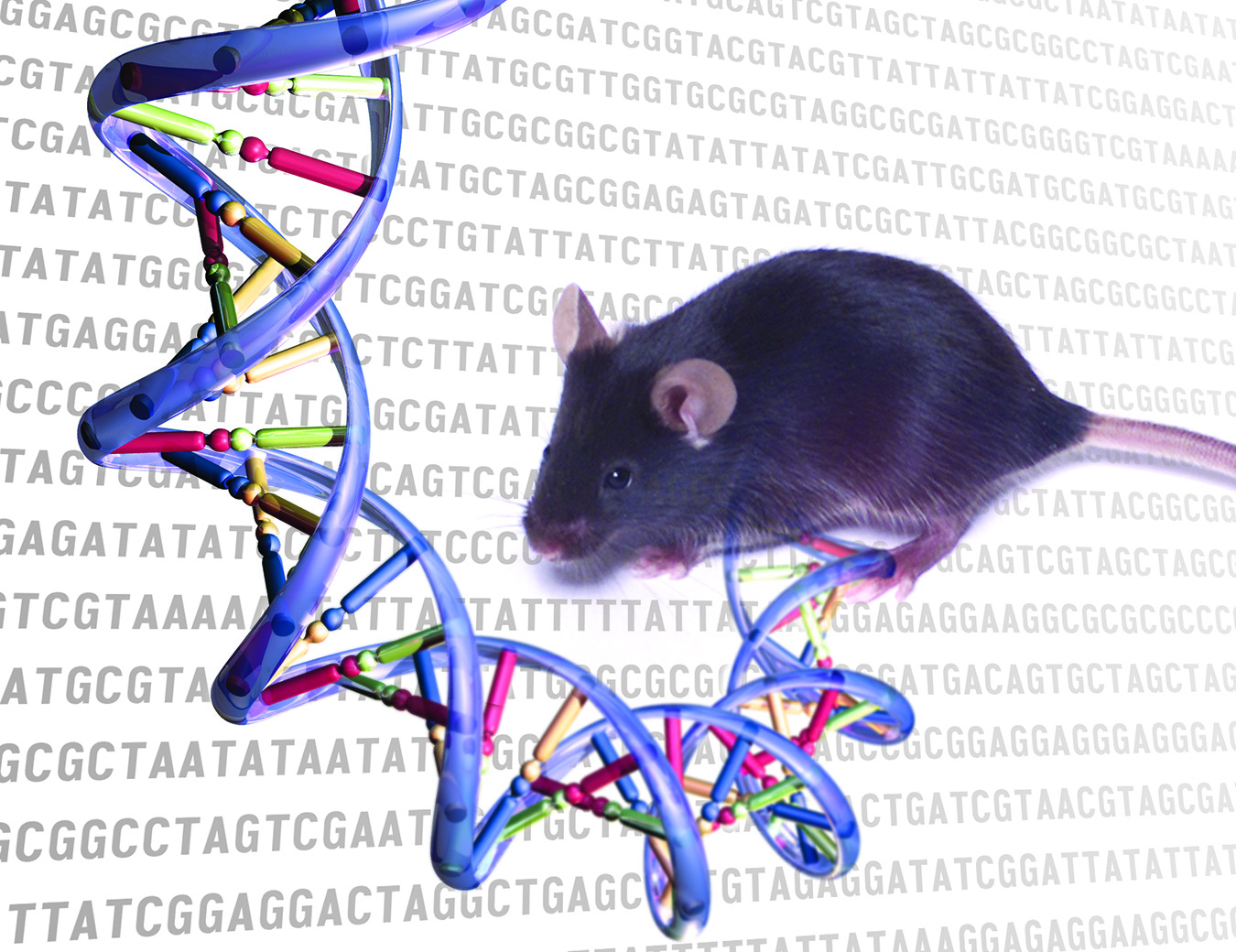 Decoding the Mouse Genome