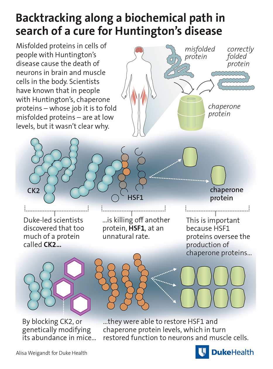Backtracking along a Biochemical Path in Search of a Cure for Huntington's Disease