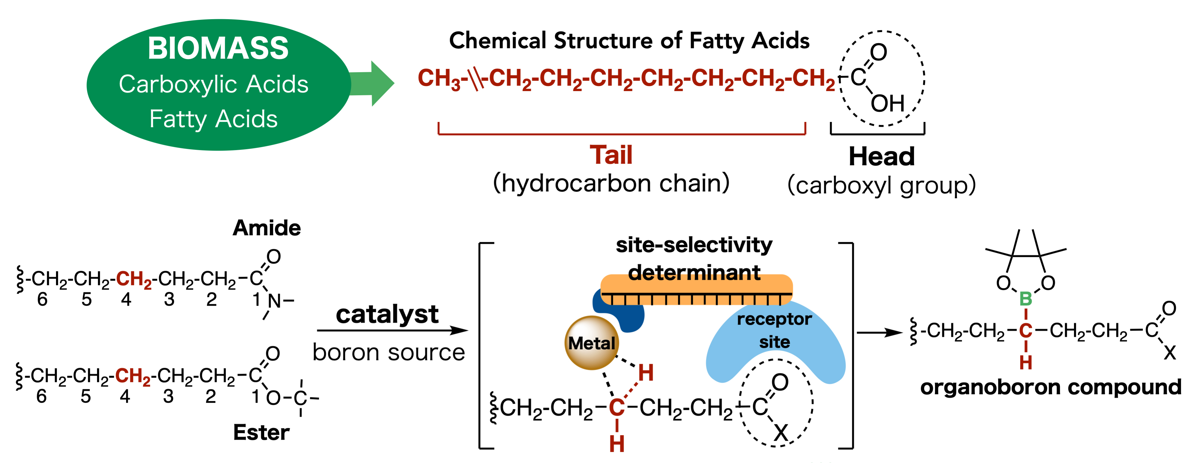Mechanism of Action of the New Catalyst