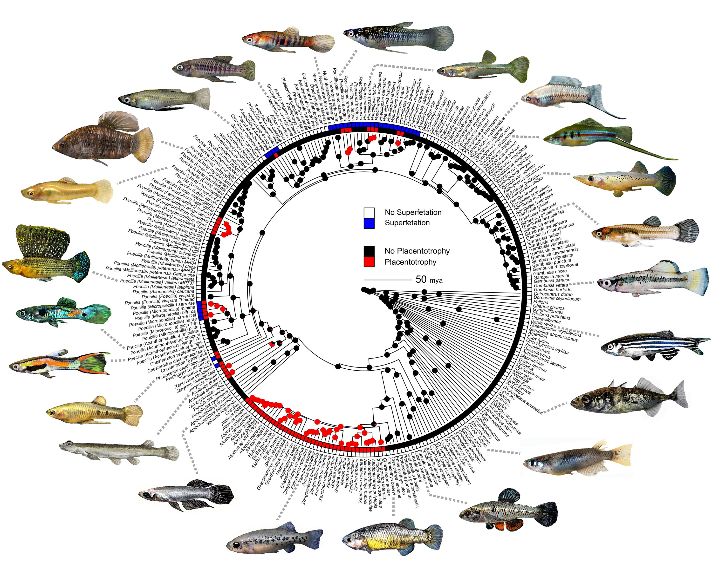 Reconstruction of Fish Family Ancestries