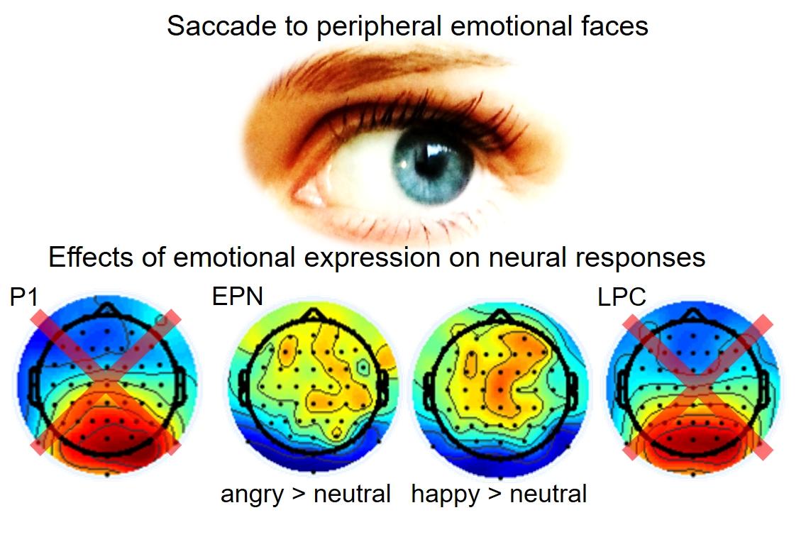Scientific Image Showing
