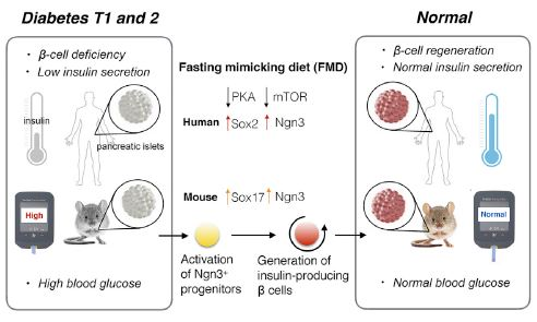 Fasting-Mimicking Diet and Diabetes